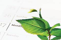 Leaf-on-Calendar-CSR9995300_xl