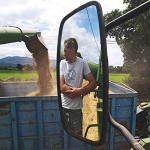 harvesting barley ardfinnan-05